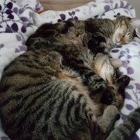 World's Best Multiple Cat Clumping Cat Litter uploaded by jaime H.