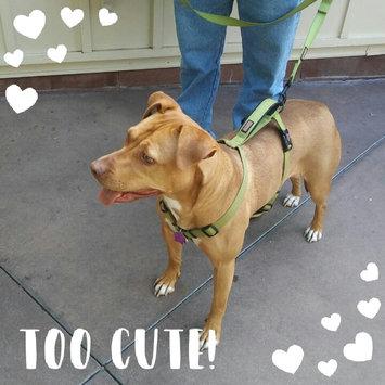 Photo of KONGA Comfort Dog Harness & Traffic Loop uploaded by Sonya K.
