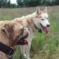 Pedigree® Adult Complete Nutrition Dry Dog Food 50 lb. Bag uploaded by HEATHER B.