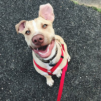 Majestic Pet Products, Inc. Majestic Pet Adjustable Nylon Dog Harness - Black Medium uploaded by Natalie A.