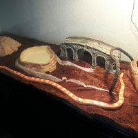 Zoo Med Heat and UVB Basking Spot Lamp and Reptile Sun Fluorescent Combo Pack uploaded by Isai H.