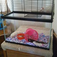 You & Me Rat Manor Habitat, 16.5