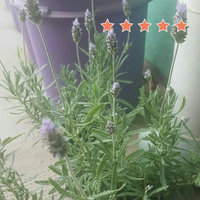 Sai Baba Super Hit Incense uploaded by rocio o.