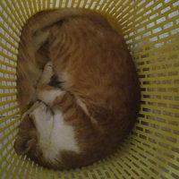 Friskies Party Mix Cat Treats Original Crunch: Chicker Liver & Turkey uploaded by Fatim Z.