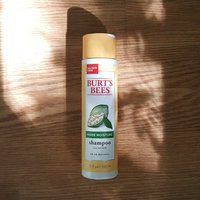 Burt's Bees More Moisture Shampoo uploaded by Justin S.
