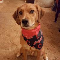 PetArmor Flea & Tick for Dogs uploaded by Shawna h.