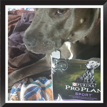 Photo of PRO PLAN® SPORT® ALL LIFE STAGES Performance 30/20 Formula uploaded by kimberly s.