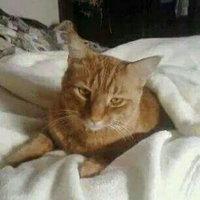 Friskies Cat Treat uploaded by Deborah G.