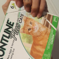 Frontline Plus Cats 8+ weeks uploaded by Veronica M.