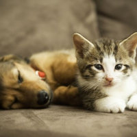 World's Best Cat Litter uploaded by Khadidja F.