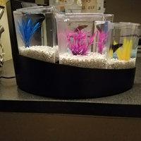 Aqueon Black Betta Falls Aquarium Kit, 2 galllon () uploaded by Ashlea D.