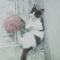 Whiskas® Kitten Chicken & Turkey Flavors Dry Cat Food 3.45 lbs. uploaded by Alondra C.