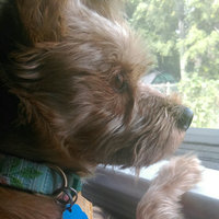 Good2Go Pink Polka Dot Dog Collar, Small uploaded by Crystal R.