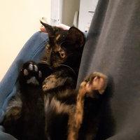 PureBites Freeze Dried Shrimp Cat Treats (0.28 oz.) uploaded by Maude R.