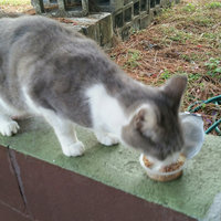 Purina Friskies Savory Shreds Chicken & Salmon Dinner in Gravy Cat Food uploaded by Ramonita R.