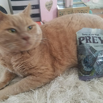 Photo of Taste of the Wild PREY Turkey Formula for Cats uploaded by Hilary B.