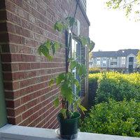 Fine Gardening uploaded by Amiya L.