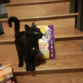 Photo of Meow Mix Adult Cat Food Original Mix 18 Pound Bag - Nestlé USA uploaded by Shannon C.