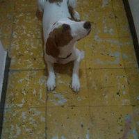 Pedigree® Medium Jumbone™ Real Beef Flavor Dog Treats uploaded by Johana R.