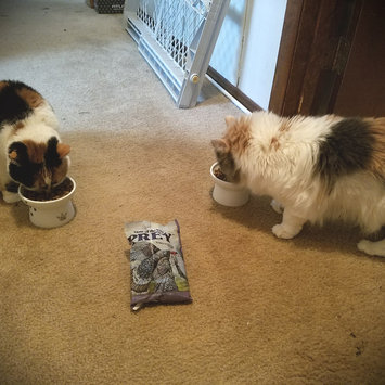 Photo of Taste of the Wild PREY Turkey Formula for Cats uploaded by Jessica D.