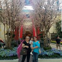 The Bellagio Hotel Las Vegas uploaded by miriam t.