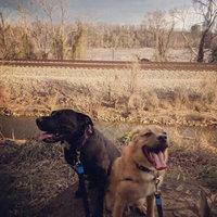 GNC Pets Dry Skin Dog Shampoo uploaded by Justina W.