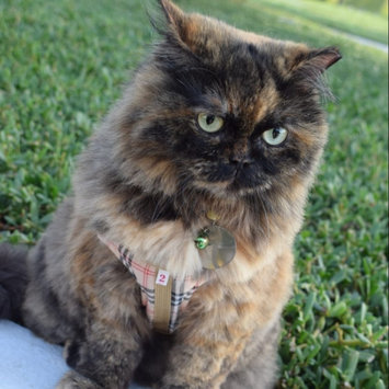 Photo of PureBitesA Freeze Dried Value Pack Cat Treat uploaded by iqra m.