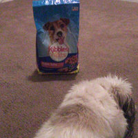 Kibbles n' Bits Small Breed Mini Bits Savory Beef & Chicken Flavor Dog Food uploaded by Paula G.