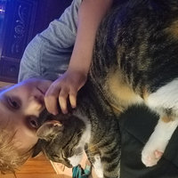 TEMPTATIONS™ MixUps Treats For Cats Surfer's Delight Cat Treats uploaded by Faith B.