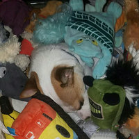 BarkBox uploaded by Melissa A.