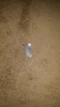 Photo of SmartyKat Skitter Critters Cat Toy uploaded by Sabrina P.