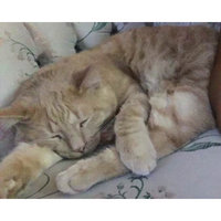 Safari Pet Coastal Pet Products CSFW419 Safari Self Clean Slicker Cat Brush uploaded by Taahirah J.