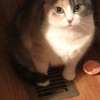 Meow Mix Tender Centers Cat Food Salmon & White Meat Chicken uploaded by Dianna W.