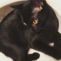 Nestlé Purina Cat Supplies Fancy Feast Kitten Ocean Fsh uploaded by Haley S.