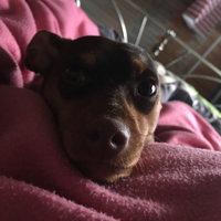 Milk Bone Original Dog Treats with Marrow - 40 oz uploaded by Savannah W.