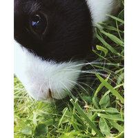 Vitakraft Yogurt Drops for Rabbit Treat - 5 oz. uploaded by Catherine E.