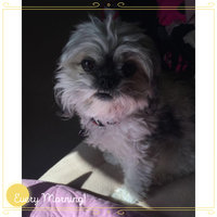 Burt's Bees Puppy Tearless Shampoo uploaded by Shelby B.