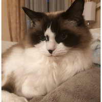 Fresh Step Scoopable Clumping Cat Litter uploaded by Linda M.