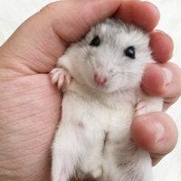 Vitakraft Milk/Honey Drop for Hamster Treat- 5.3 oz. uploaded by Shawna E.