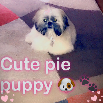 Photo uploaded to #NationalPetDay by CANDISS D.