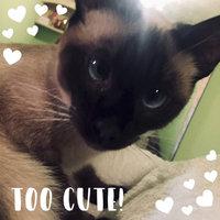 TEMPTATIONS® SNACKY MOUSE™ Cat Toy uploaded by Emilija P.
