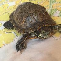 Hagen Nutrafin Turtle Pellets, 85-Gram uploaded by France-Claire R.