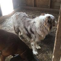Taste Of The Wild High Prairie Dry Puppy Bison Formula uploaded by Corinne K.