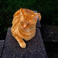 Whiskas WHISKASA Tempations Mix Ups Cat Treats uploaded by Sara H.