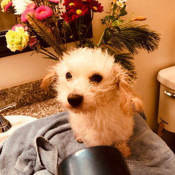 Photo uploaded to #NationalPetDay by melissa ☻.