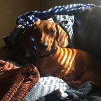 Purina Beggin' Crunch Dog Treats Family Group Shot uploaded by Amanda J.