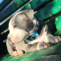 Blue Buffalo BLUETM Bits Soft-Moist Dog Treat uploaded by satira D.