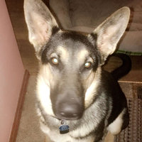Greenies Chews For Senior Dogs, Treats For Dogs uploaded by Kara A.