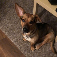 United Pet Group Mini Dingo Mini Bones Dog Treats uploaded by Amber B.