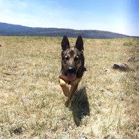 Pet Botanics Natural Bacon Mini Training Reward Dog Treat uploaded by Lexie C.